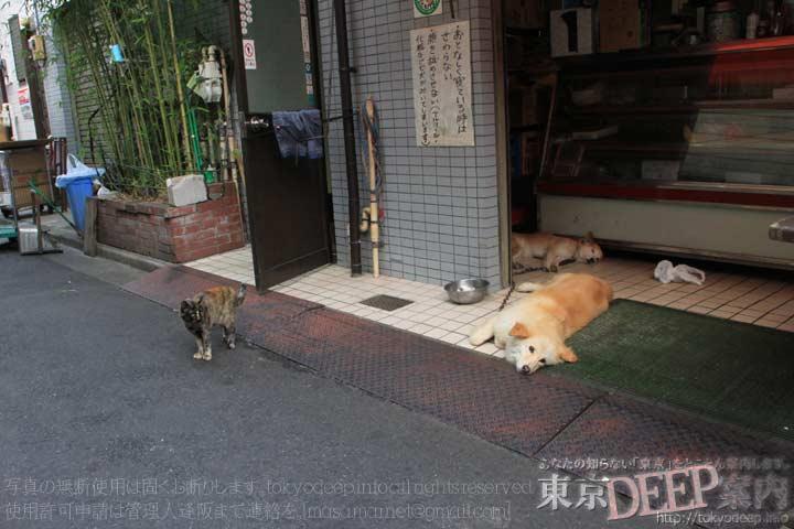 http://tokyodeep.info/img/29-186.jpg