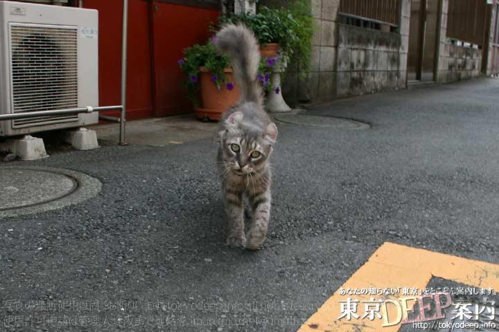 http://tokyodeep.info/img/62-331.jpg